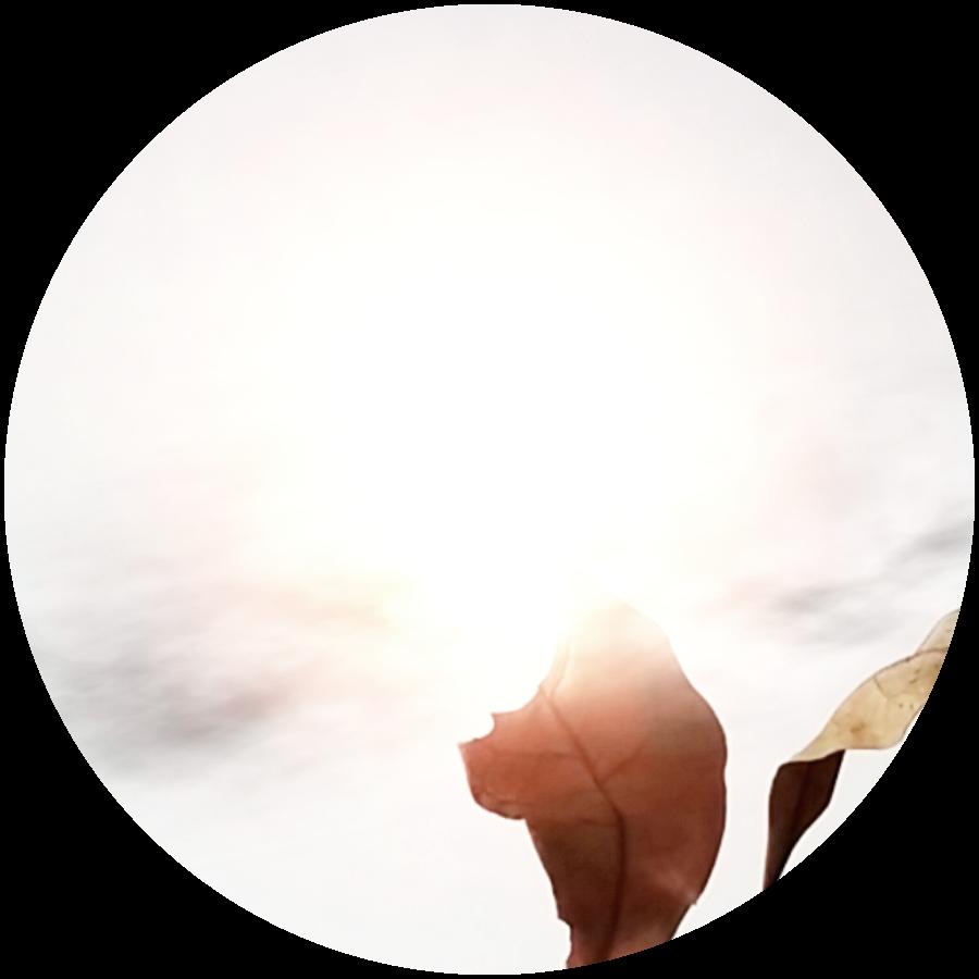 secret-botany-weather-2