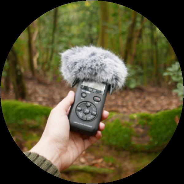 Sound recording in the primeval forest in Nara
